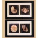 Cuadro conchas de mar II