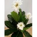 Planta artificial Gerbera