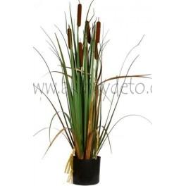 Cattail grass
